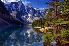 Canada: Banff National Park: Lake Moraine (mariofalcetti) Tags: park lake canada tree montagne landscape lago banff acqua paesaggi montagna moraine paesaggio pianta banffnationalpark lakemoraine