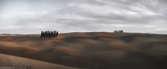 Panorama of cypress grove at the field (nickolay_khoroshkov) Tags: road wood sunset sky italy panorama sunlight tree nature beautiful field rural landscape countryside italian europe grove outdoor farm country hill meadow farmland valley tuscany cypress agriculture toscana tuscan orcia