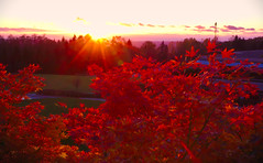 Much Ado.red (Just Call Me Dave) Tags: autumn sunset canada tree britishcolumbia burnaby simonfraseruniversity efs1585f3556isusm