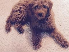 gabbys-adorable-little-boy-bruiser_16542833703_o