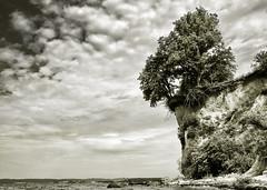 Living On The Edge (parkerbernd) Tags: sea bw cliff white black tree nature water rock germany island lumix living angle alt low reserve baltic panasonic explore edge rügen ostsee felsen mönchgut klippe bioshere reddevitz gx1