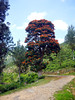 Namunukula Mountain Range (Malaka Sanjaya Wijayanayaka) Tags: tree trees namunukula mountain hill sky namunukulamountainrange range road flower sri lanka srilanka green flowers red tea hike