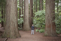 IMG_8988 copy (AsianInsights) Tags: newzealand northisland asiapacific holiday nature 2016 december fern ferntree forest rotorua forestresearchinstitute research redwoods redwood treewalk redwoodforest