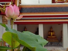 Juste une fleur de lotus pour vous souhaiter un joyeux Noël.   Just a lotus flower to wish you a merry christmas (alainpere407) Tags: alainpere ruesdebangkok bangkok lotus
