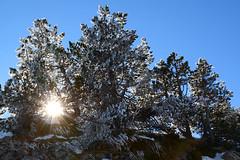 Gélidos  días. (Victoria.....a secas.) Tags: pirineos nieve snow contraluz