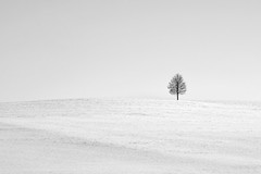 lonely tree (freiraum7) Tags: sony a7ii i leica summicronm 90mm f2