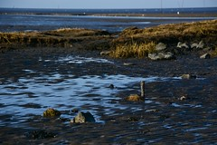 Nordische Ruhe (Nikonfotografie) Tags: niedersachsen wattenmeer watt wremen nordsee nordseeküste northsea meer küste landschaft landscape nikon nikonlove meinnorden detailverliebt