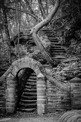 Wissahickon Staircase (t conway) Tags: