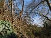 Ψίνθος (Psinthos.Net) Tags: ψίνθοσ psinthos winter january ιανουάριοσ γενάρησ χειμώνασ φύση εξοχή countryside nature afternoon απόγευμα απόγευμαχειμώνα χειμωνιάτικοαπόγευμα ουρανόσ sky bluesky γαλάζιοσουρανόσ trees δέντρα βάτοι βάτα brambles thorns αγκάθεσ leaves φύλλα winterleaves φύλλαχειμώνα χειμωνιάτικαφύλλα κλαδιά branches treebranches κλαδιάδέντρου κλαδιάδέντρων wildivy άγριοσκισσόσ σύννεφα νέφη clouds light shadow φώσ σκιά φώσήλιου φώσηλίου sunlight planetrees πλατάνοι πλάτανοι πλατάνια πλάτανοσ planetree κλήμα vine valley psinthosvalley κοιλάδα κοιλάδαψίνθου κοιλάδαψίνθοσ φασούλι φασούλιψίνθοσ φασούλιψίνθου κοιλάδαφασούλι fasuli fasouli fasoulivalley fasoulipsinthos fasoulipsinthou sunrays αχτίνεσήλιου μέρα day