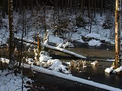 Stille Zeit (berndtolksdorf1) Tags: jahreszeiten winter wald teich eis schnee kalt gefroren outdoor bäume