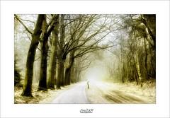 it's a long way (Zino2009 (bob van den berg)) Tags: fog nebel mist nature holland holterberg close cyclist healthy man sport sportive march frühling springtime light day trees road path depth endless zino2009 bicycle