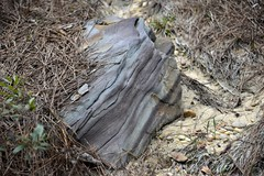 A bit large to collect (holdit.) Tags: brookwoodal rockin rockcollecting alluviaal coal iron sand clay forest gas