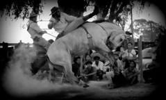 Soedi Mirapalheta (Eduardo Amorim) Tags: gaúcho gaúchos gaucho gauchos cavalos caballos horses chevaux cavalli pferde caballo horse cheval cavallo pferd crioulo criollo crioulos criollos cavalocrioulo cavaloscrioulos caballocriollo caballoscriollos pampa campanha fronteira jaguarão riograndedosul brésil brasil sudamérica südamerika suramérica américadosul southamerica amériquedusud americameridionale américadelsur americadelsud cavalo 馬 حصان 马 лошадь ঘোড়া 말 סוס ม้า häst hest hevonen άλογο brazil eduardoamorim gineteada jineteada