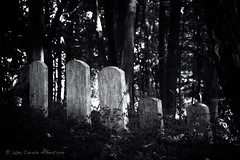 DSC_2999 - Woodland Spirits (Athtart) Tags: friends monochrome cemetery forest dark head stones hill meeting august tombstones woodlandspirits 52in2015 week35themegraveyardcemeteryormemorialnewyorkyorktownheightsamawalk houseamawalk