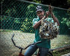 Vendedor de jueyes | Land crab seller (josefrancisco.salgado) Tags: man fauna nikon puertorico crab pr nikkor hombre cangrejo d4 loíza 2470mmf28g