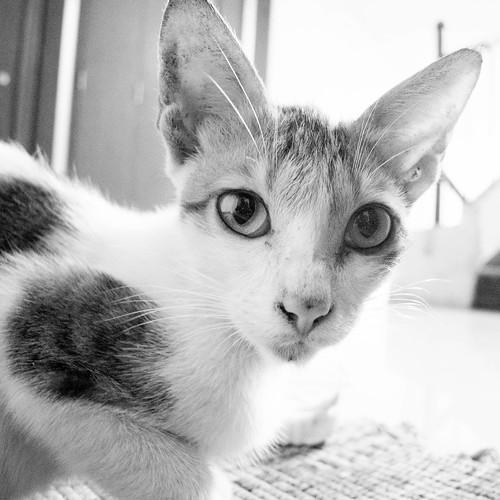 Feline guest - 2
