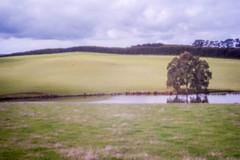 Pinhole photo (laurie.g.w) Tags: west grass rural landscape photo pin hole farming australia victoria pinhole hills gippsland thorpdale