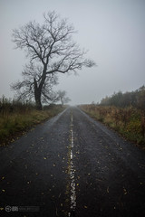 Naked (iBriphoto) Tags: road old autumn weather fog cycling stirling foggy route national cycle commute tuesday 76 ncn76 nationalcycleroute76 oldstirlingroad