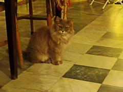 Arcos de la Frontera (Sharon Frost) Tags: cats aurelia arcosdelafrontera hotelcasagrande