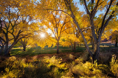 Seasonal Color (Michael Bollino) Tags: light sun color fall nature yellow utah nikon shine autumntrees cottonwoods sunstar clikelite