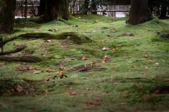 Ryoanji Temple, Kyoto (Christian Kaden) Tags: plant japan temple moss kyoto pflanze pflanzen   kioto kansai ryoanji moos  tempel