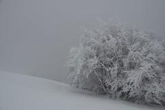 Givré - Frozen... (Explored 2015-11-24) (Gisou68Fr) Tags: snow tree frozen arbre gelé ballondalsace givré canoneos650d efs18135mmf3556isstm
