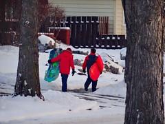 Winter outdoor fun (peggyhr) Tags: trees red snow canada black green boys edmonton fences alberta thegalaxy peggyhr dsc03450a plasticsleds