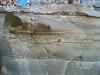 HPIM3990.JPG (ArgyleMJH) Tags: bouma california deepwater geology gradedbedding heislerpark lagunabeach mainbeach miocene mudstone orangecounty sandstone sedimentary topangaformation turbidite turbiditycurrent