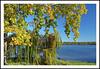 An Autumn Afternoon at Ypsilanti's North Bay Park (sjb4photos) Tags: michigan ypsilanti washtenawcounty fordlake northbaypark autumn