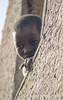 Djenne, Mali, West Africa (zellerw0) Tags: sahel westafrica portrait djenne window mali travel street