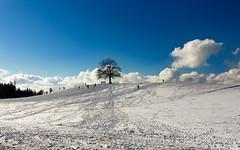 the same tree (lichtauf35) Tags: tree landscape bluesky bavaria scape pancake efs24stm sl1 travelpics snow winter lightroom bluecloudysky bluewhite bestof2017 3000views derzeitaugenblickestehlen lichtauf35