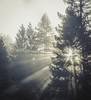 Forest Light (pixelmama) Tags: california mendocinocoast mendocinocounty morning philo pixelmama sunbeams