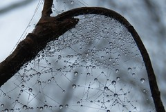 The world of water drops (Elisa1880) Tags: waterdruppel water droplet drop regen rain dauw dew mist fog meer en bos den haag the hague wood forest branch tak spinnenweb spider web nederland netherlands