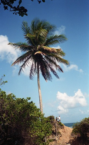 A palm tree on the beach