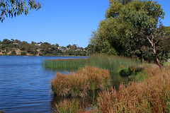 Blue Waters Lake, Ocean Grove (Boobook48) Tags: bluewaterslake oceangrove victoria australia lake