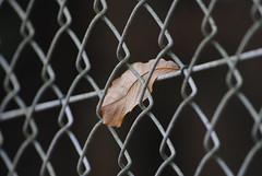 Hoja (borneirana) Tags: leaves hojas brown otoño autumm alambrada wire macrophotography macro street ngc