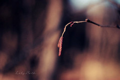 - (-LilyBeth) Tags: inverno winter colors bokeh dof depthoffield natura nature nikon wonderfulworld 50mm