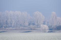 Winter (LucaSantin) Tags: 70300vr cadaverna campagna d750 ghiaccio ice inverno landscape mist nebbia nikon paesaggio winter frozen