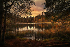 The silence of nature (Chrisnaton) Tags: jura etangdelagruère lake nature outdoor eveningmood eveninglight eveningsky switzerland landscape moorlake naturereserve trees forest