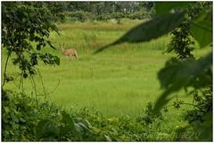 DSC08659PJ_resultat (http://phj.bookfoto.com/) Tags: botswana philippe jubeau afrique delta okavango