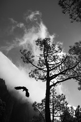 free as a bird (petdek) Tags: nature mountain cloud bird silhouette poetry lapalma highcontrast