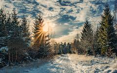 Winter (Sascha Wolf) Tags: winter schnee kalt wald schönbuch tamron tele sonne