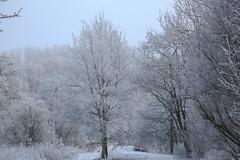 Winter Hiver (tribsa2) Tags: nederlandvandaag marculescueugendreamsoflightportal winter hiver bos forest foret