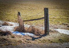 Supporting a Friend (HFF) (13skies) Tags: happyfencefriday fence shade shadow small country countryroad field sunlight hardlight sonyalpha99 friday friends wirefence wired snow winter cold hff
