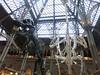 garrulous and aloof (cleanskies) Tags: ounhm oxfordnaturalhistorymuseum museum tyrannosaur chicken giantchicken skeleton