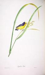 Anglų lietuvių žodynas. Žodis violaceous reiškia a  bot. našlaitinių šeimos 2 violetinis lietuviškai.