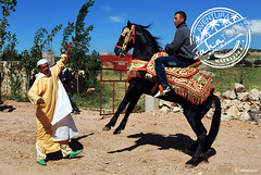 bereberes del atlas (sahatours) Tags: voyage africa travel viaje people horse nikon traditions morocco maroc viagem atlas marocco marruecos viaggio marrocos travelphotography travelphoto