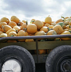 Fall (StateMaryland) Tags: summer food usa holiday halloween countryside seasons country rustic harvest nobody vegetable container transportation vehicle northamerica daytime crops produce trailer agriculture carrying ripe