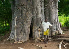 Togo, West Africa, Nadoba, tamberma somba tribe man standing in front of an old baobab where people used to live inside the empty trunk long time ago (Eric Lafforgue) Tags: africa people color tree male men horizontal outdoors tribal unesco worldheritagesite westafrica trunk togo benin tribe voodoo oneperson baobab vodun vodoun voudou onemanonly somba colourimage africanethnicity 1people tamberma atacora vodon بنين nadoba ベナン бенин 贝宁 benin02457
