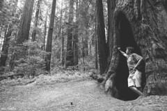 Within the Redwoods (Pamela Saunders) Tags: california travel trees blackwhite woods roadtrip redwood exploreusa